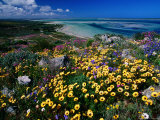 Overhead of Beach and Wildflowers Photographic Print by Frans Lemmens