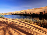 Oasis in the Sahara Desert Lmina fotogrfica por Frans Lemmens