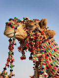 Camel Decoration at Desert Festival Photographic Print by John Sones
