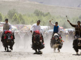 Yak Racing at Gyantse Horse Racing Festival Photographic Print by Tim Hughes