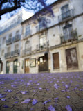 Purple Flower Petals Littering Sidewalk, Old Lisbon Photographic Print by Christopher Herwig
