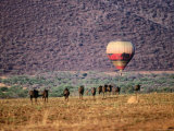 Wildebeests and Hot-Air Balloon Photographic Print by Frans Lemmens