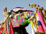 Colourful Elephants at Elephant Festival Photographic Print by John Sones