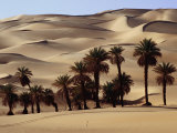 Date Palms Set Amongst the Sand Dunes, Sahara Desert Photographic Print by Anthony Ham