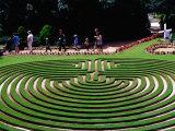 Maze at Cockington Green Gardens Photographic Print by Richard I'Anson