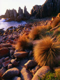 Cape Woolamai Fauna Reserve Photographic Print by Paul Sinclair