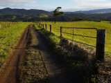 Farm Track and Gate in Green Landscape Photographic Print by Johnny Haglund