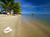 Nautical Inn Beach at Seine Bight, Belize Photographic Print by Tim Rock