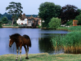 New Forest Pony by Pond Photographic Print by Holger Leue
