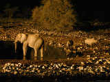 Elephants and Rhinoceroses Drinking at Watering Hole Lmina fotogrfica por Frans Lemmens