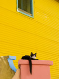 Cat Resting on Pillar Next to Yellow Wall, Barrio La Boca Photographic Print by Roberto Gerometta