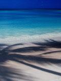 Palm Tree Shadows on Beach at Dickenson Bay Photographic Print by Richard I'Anson