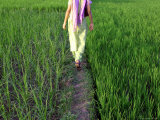 Woman Walking Through Rice Paddy Photographic Print by Brian Cruickshank
