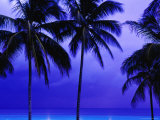 Palm Trees and Stormy Sky at Dusk at Dover Beach Photographic Print by Richard I'Anson