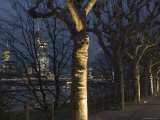 Tree-Lined Untermainufer and City Skyline at Night Photographic Print by Holger Leue
