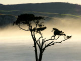 Lone Tree Overlooking Catlins' South Coast in the Evening Mist Photographic Print by Uros Ravbar
