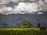 Peaceful Horse Range Setting on the Road to Wailua Falls, with Kauai Mountains in Background Photographic Print by Merten Snijders