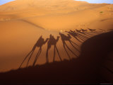 Camel Trek Casts a Line of Shadows onto the Immense Sand Dunes of the Erg Chebbi Near Merzouga Photographic Print by Kristin Piljay