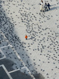 Pigeons on Piazza San Marco, Seen from Campanile Tower Photographic Print by Holger Leue