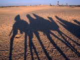 Camel Shadows at the Northern Edge of the Sahara Desert Near the Small Town of Zaafrane Photographic Print by Andrew Burke