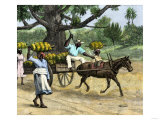 Ripe Bananas Brought to the Wharf, Annatto Bay, Jamaica, 1880s Giclee Print