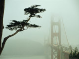Golden Gate Bridge in Morning Fog with Cypress Tree Photographic Print by Nicholas Pavloff