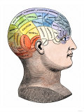 Phrenology Model of the Locations of the Various Organs of Mind in the Human Head Giclee Print