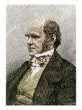 Young Charles Darwin, London Giclee Print