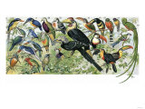 Quetzal, Toucans, and Other Tropical Birds Giclee Print