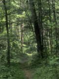 Pathway of the Wilderness Road, Levi Jackson Wilderness Road State Park, Kentucky Photographic Print