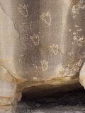Bear Paw Petroglyphs of the Anasazi Ancestral Puebloans, Canyon De Chelly, Arizona Photographic Print