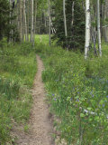 Trail Through Aspen Forest in the Pecos Wilderness, Sangre De Cristo Mountains, New Mexico Photographic Print
