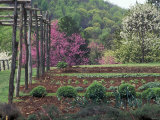 Vegetable Garden at Monticello, Thomas Jefferson's Home in Charlottesville, Virginia Photographic Print