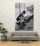 2 Rows of Chinese Trackers Plodding Along Bank of Yangtze River Towing a Junk Slowly Up River Wall Mural by Dmitri Kessel