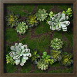 Faux Succulents III Dimensional Product