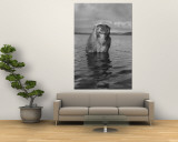 Rhesus Monkey Sitting in Water Up to His Chest Wall Mural by Hansel Mieth