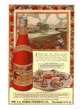 Tomato Sauce Catsup Sniders Oysters Tomatoes, USA, 1900 Prints