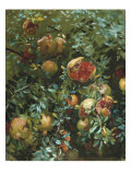 Pomegranates, Majorca Posters by John Singer Sargent