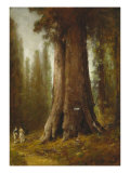 California Redwood Trees Reproduction procédé giclée par Thomas Hill