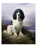 Royal, a Tri-Colour Working Springer Spaniel Giclee Print by Lilian Cheviot