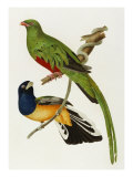Maccaws, History of Brazilian Birds, 1852-1856 Giclee Print by Jean-Theodore Descourtilz
