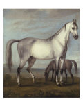 Grey Mare and a Foal in an Extensive Hilly Landscape, 18th Century Giclee Print by Peter Tillemans
