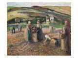 Picking Potatoes. La Recolte Des Pommes de Terre, 1893 Posters by Camille Pissarro