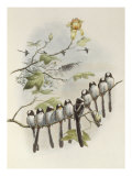 Long-Tailed Tit, Mecistura Caudata, The Birds of Great Britain, 1862-1873 Giclee Print by John Gould
