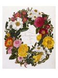 Frontispiece of Roses, Collection of Roses from Nature Giclee Print by Mary Lawrence