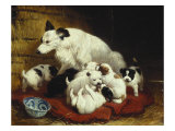 The New Arrivals, 19th Century Giclee Print by Henriette Ronner Knip