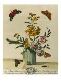 Plate Xl from The Aurelian, Natural History of English Moths and Butterflies, 18th Century Poster by Moses Harris