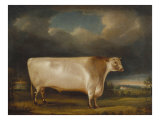 Comet' a Light Roan Short-Horn Bull in a Landscape, 1811 Giclee Print by Thomas Weaver