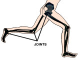 Joints Involved in Running Hip Knee Ankle Photographic Print