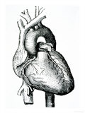 Human Heart Giclee Print